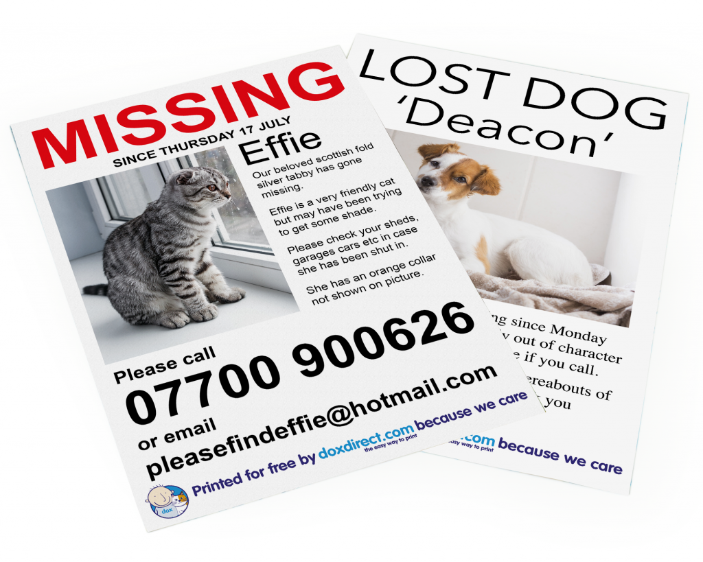 missing cat posters